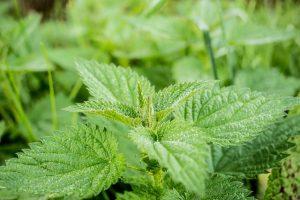 Tiszta forrás teakeverék - kisCSILLAg gyógynövényes teakeverék